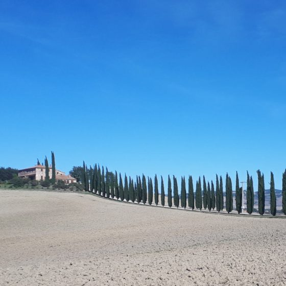 Typical Tuscan row of cypress trees