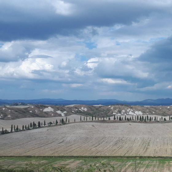 Cypress trees and dunes