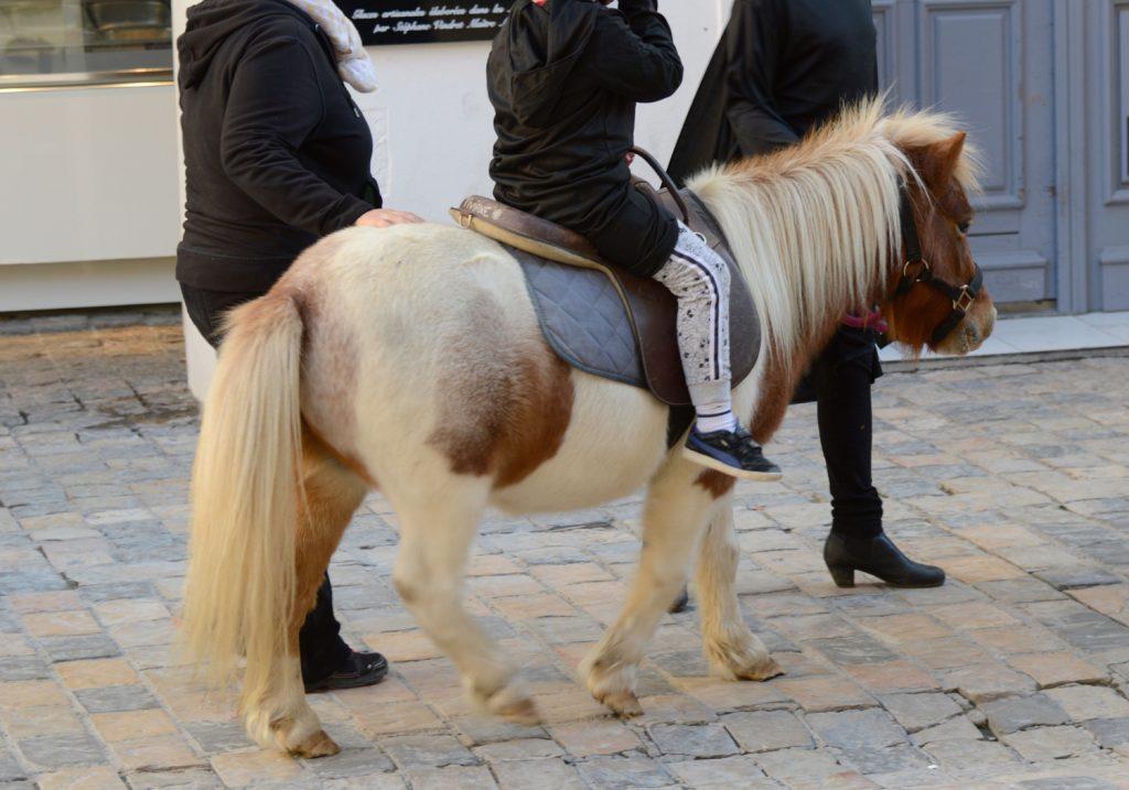 Aigues-Mortes - Children's Pony ride