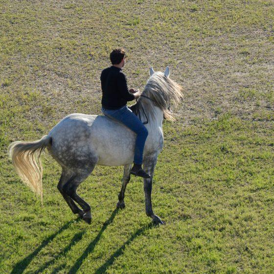 Aigues-Mortes - Camargue Horseman riding bare back