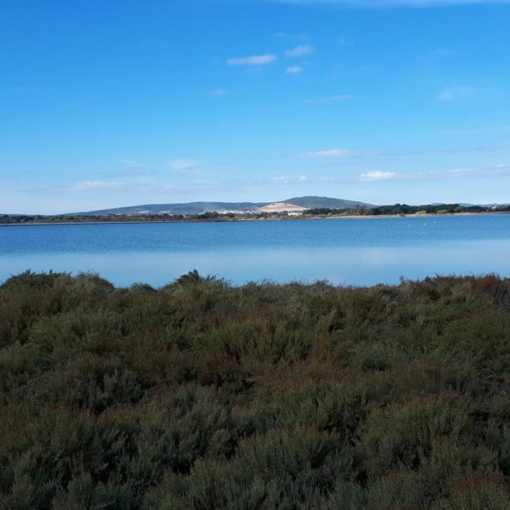 View across the Camargue lakes