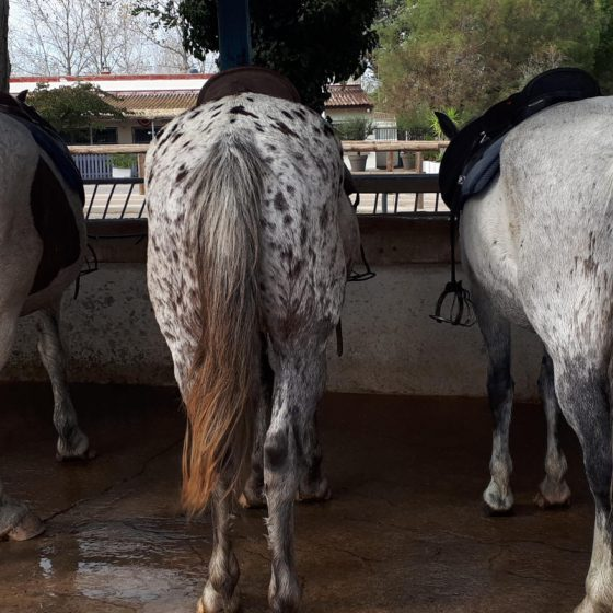 Enjay and his horse mates before our ride