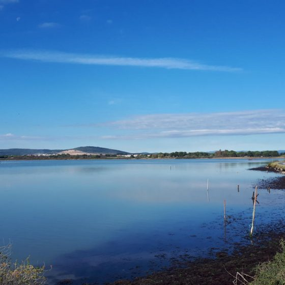 One of the etangs (lagoons) at Villeneuve-les-Maguelene, Camargue