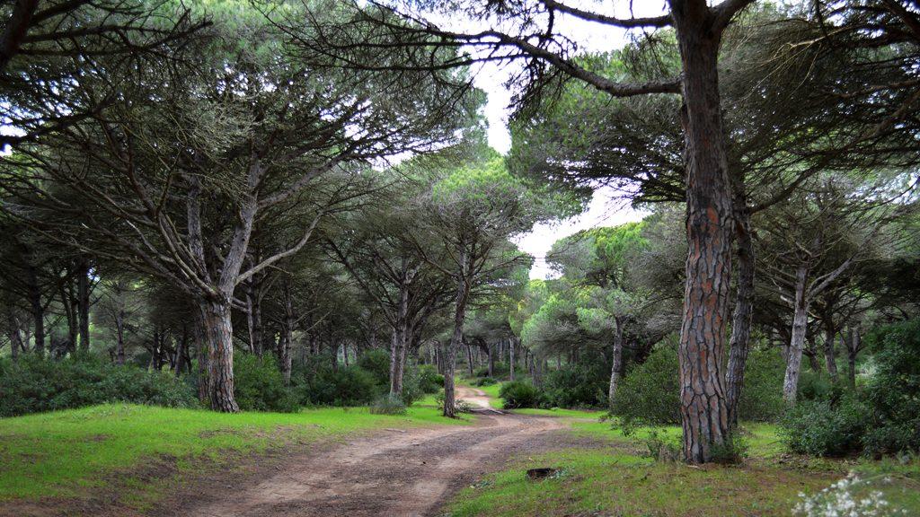 Barbate Natural park