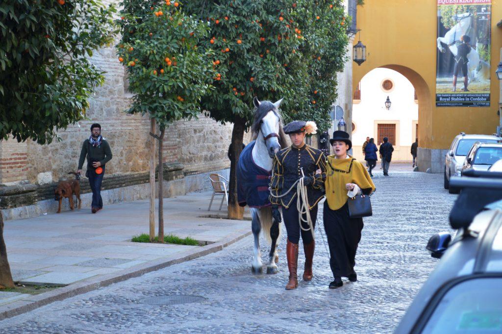Beautiful Andalucian horse in Cordoba Street