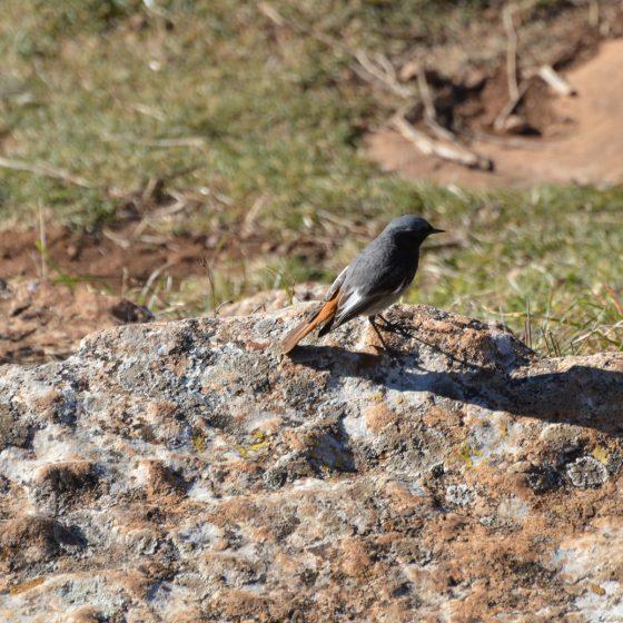 Bird spotting at El Torcal - unfortunately unidentified.