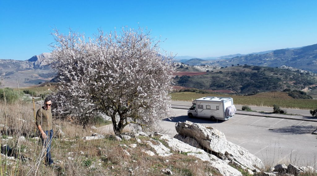 Buzz Laika Motorhome at El Torcal with almond blossom tree