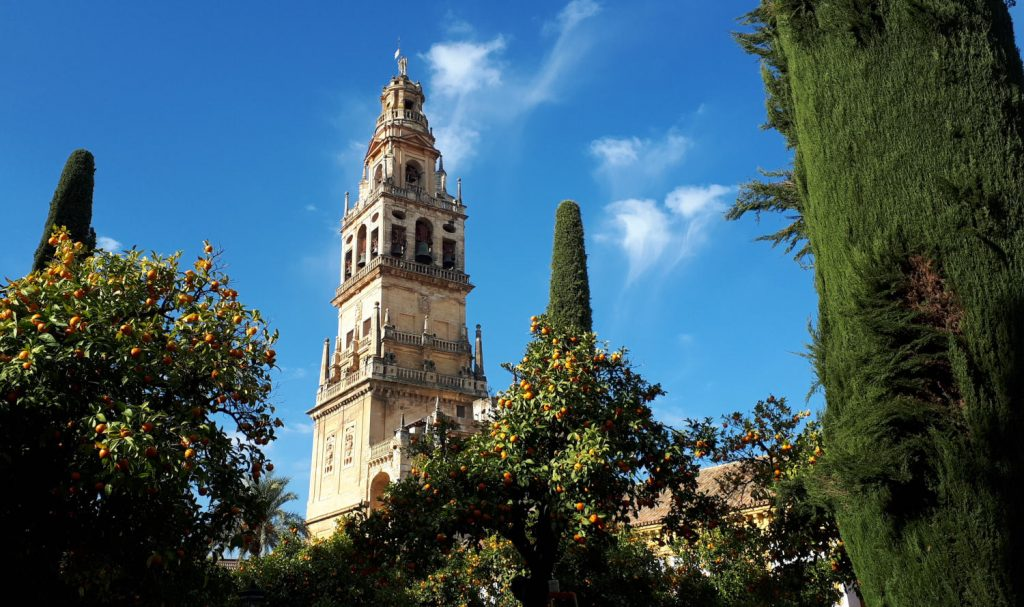 Blue skies, green trees and oranges surrounding the Mezquita's bell tower