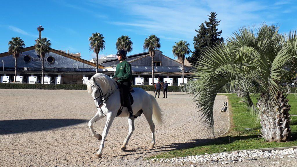 Andalucian horses of Jerez