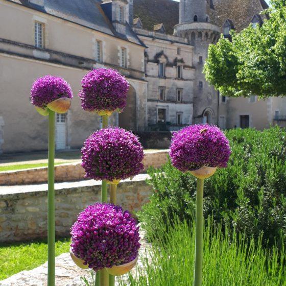 Pretty purple aliums outside St Savin Abbey