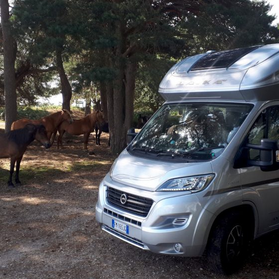 Buzz Laika the motorhome getting up close and personal with the ponies