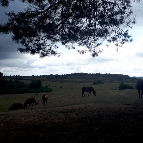 A beautiful scene in the New Forest towards the end of the day