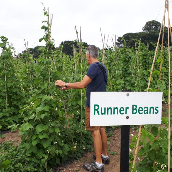 Runner beans were amongst many, many other things on offer at the Cat & Fiddle PYO
