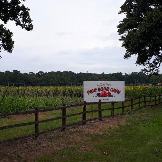 The Cat & Fiddle PYO Farm near Hinton