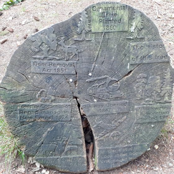 A tree stump and its rings marked with historical events to show its age