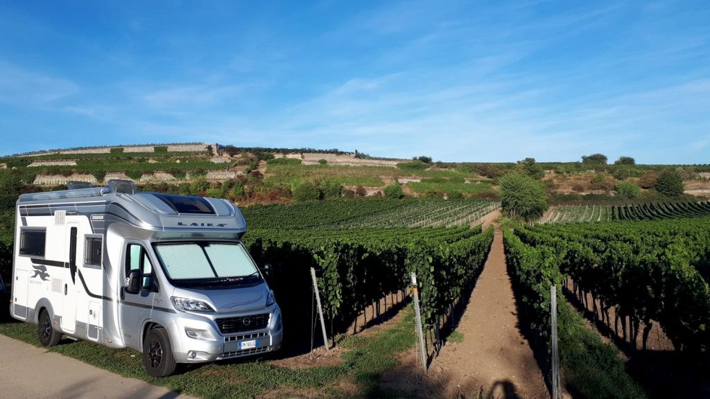 Buzz in his temporary vineyard spot before we moved to the official motorhome parking area