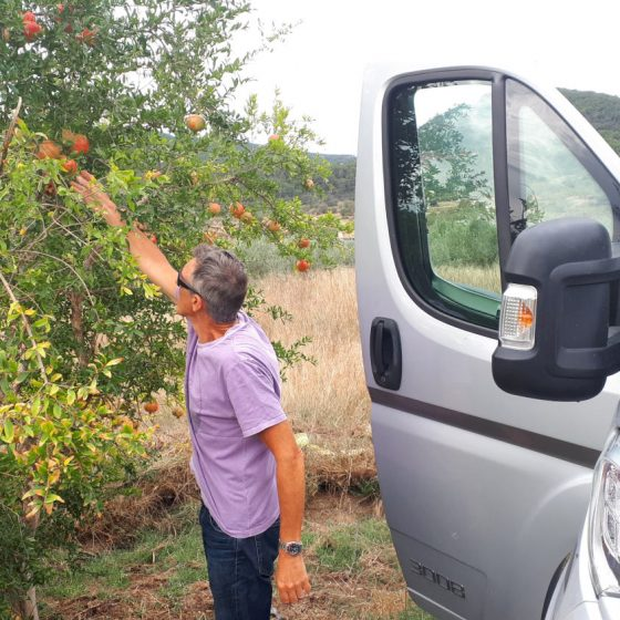 Pinching pomegranates from a tree at the side of the road. Shhhh!